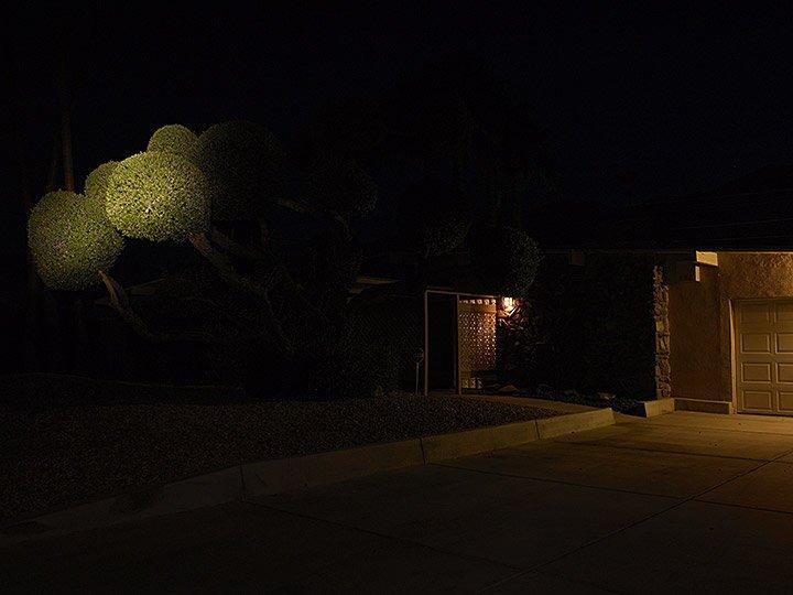 balltree_night